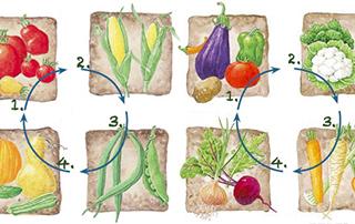 Rotation y asociación de-plantas