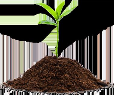plantin en compost